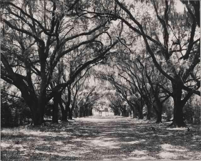 The Plantation Photographs of Robert Tebbs